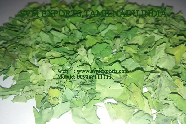 Best Moringa Dried Leaves Suppliers