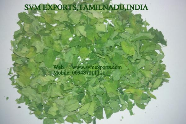 Moringa Dried Leaves Suppliers India