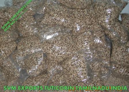 Moringa Pkm2 Seed Exporters India