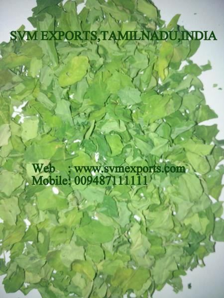 SVM EXPORTS INDIA Moringa Dry Leaves
